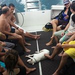 Vivi joins the divers on the boat!