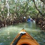 Kayaking through the mangrove.