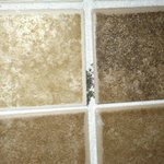 Mold in grout of shower