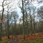 Black Spout Wood ... old oak woodland