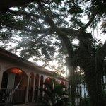 Essa árvore na entrada é linda