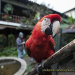 one of the resident Macaw's