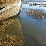 Pt. Reyes shipwreck.