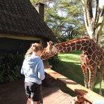 Sirikoi's resident giraffe