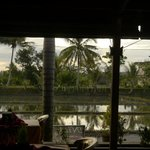 Evening view of rice paddy from restaurant