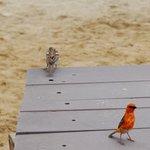 lass uns ein wenig spaTzieren geh'n, kleiner Webervogel.