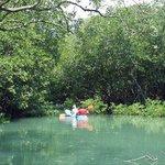 Unspoiled Mangroves