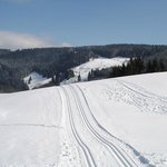 Loipe im Winter