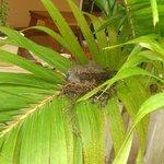 entrance palm