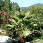 garden - views