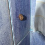 snails in the bathroom