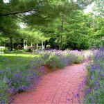 Lavender-lined brick walkways