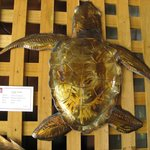Marine Grade S/Steel Large Turtle