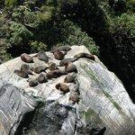 seals sunning on Milford Sound