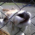 Cute friendly deer near parking lot