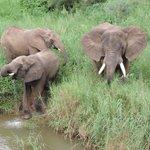 watching elephants on the balcony