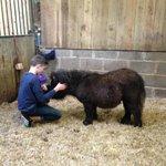 grooming the ponies