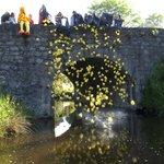 Charity Weekend Duck Race, Tassagh Bridge