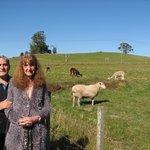 Kentish Hills Retreat surrounds