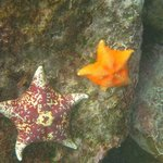 Varied colorful sea stars