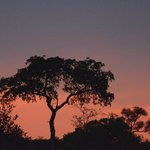 Sunset at Sabi Sands