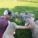 Petting the sheep