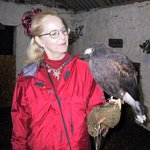 My wife watches her Harris hawk before the hunt