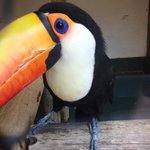 Viveiro de Tucanos é atração especial
