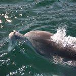 dolphin up near the boat