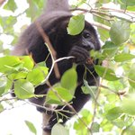 Howler monkeys serenaded us at dusk nearly every night