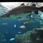 Акула в океанариуме Aquarium