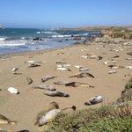 Морские слоны греются на берегу