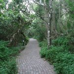 Pathway leading to rooms