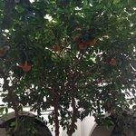 orange tree in the beautiful courtyard