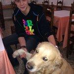 Добрая хозяйская собака и мой сын