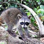 Wildlife at La Palapa.