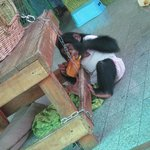 Monkey used to take pictures with tourist