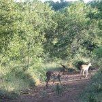 Picture from safari