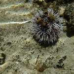 Cool Underwater Life!