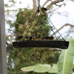 Birds feeding in the morning
