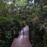 Paseos en el interior de la selva
