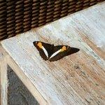 Vista abierta a las piscinas y selva, mientras tomabamos algo se posaban bellas mariposas en la