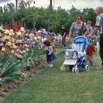Iris Gardens are superb for all generations