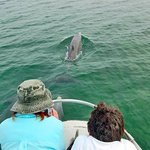 Join our researchers to observe wild dolphins, many which we know by name.