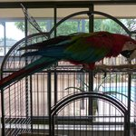 Gorgeous Parrot in the Family Room