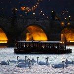 Charles Bridge, boat and swans