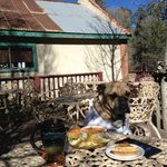 Jack, the bulldog enjoying the outdoor PET-io dining