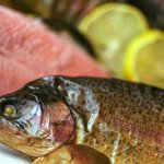 Lovedale Smokehouse - Smoked Rainbow Trout