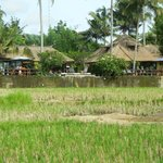 View of the villa from the rice paddy