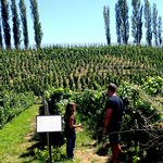 Laura showing us the family vineyards - Domaine St Diego